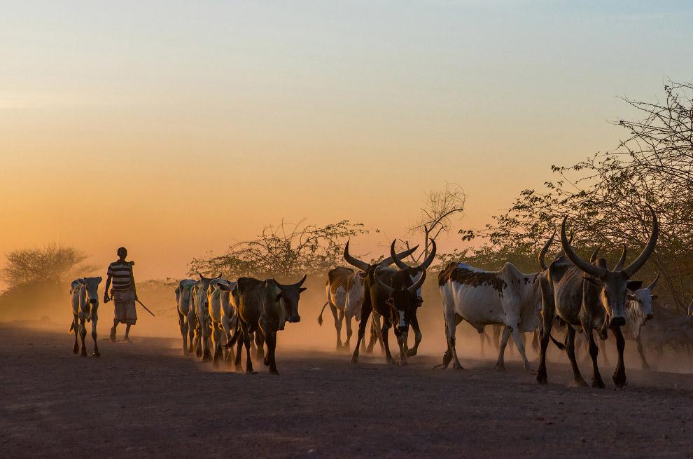 23. Эфиопия на редкость богата историей. В Ветхом Завете упоминается, что одна из рек, орошающи
