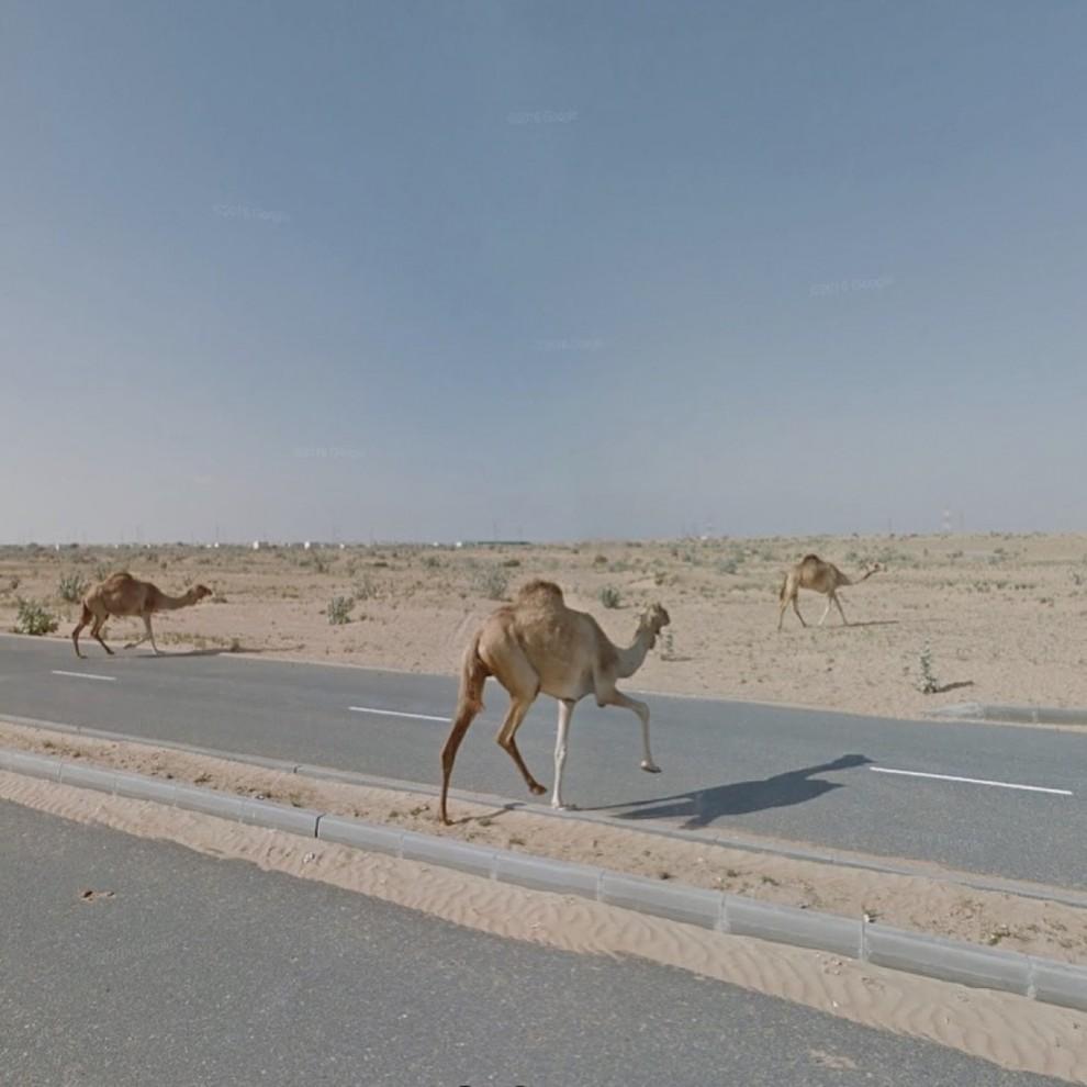 Виртуальная путешественница отыскивает необычные панорамы при помощи сервиса Google Street View (7 фото)