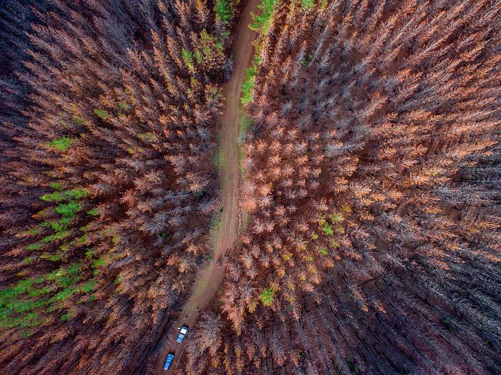 Как восстанавливают сгоревшие леса в Чили с помощью собак (11 фото)