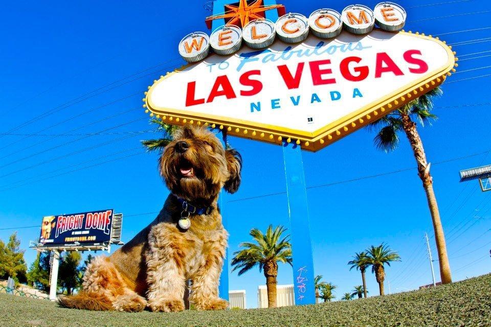 К сожалению, пес-путешественник Оскар погиб. В январе в Калифорнии он попал под колеса грузовик