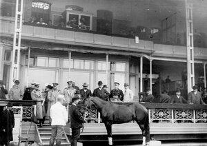 Осмотр коня перед началом  бегов на Семеновском плацу.