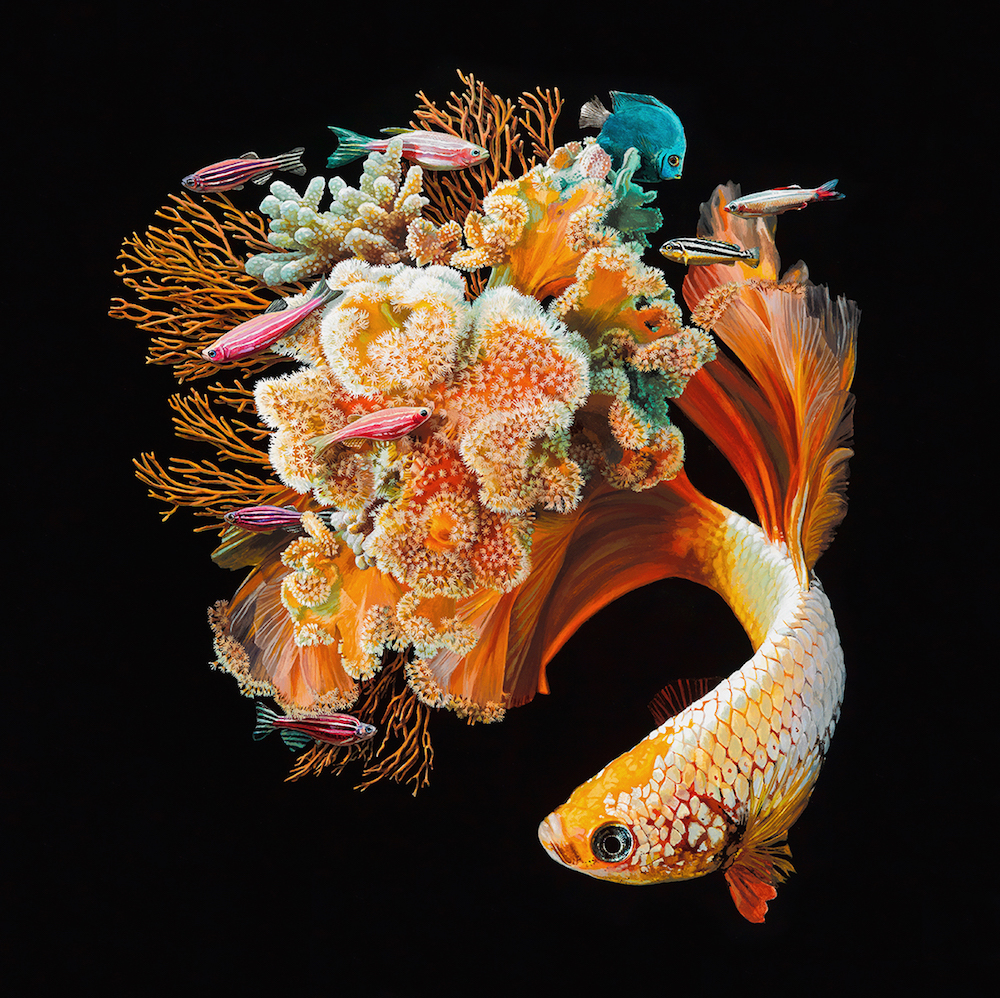 Hyperrealistic Depictions of Fish Merged With Their Coral Environments by Lisa Ericson (9 pics)