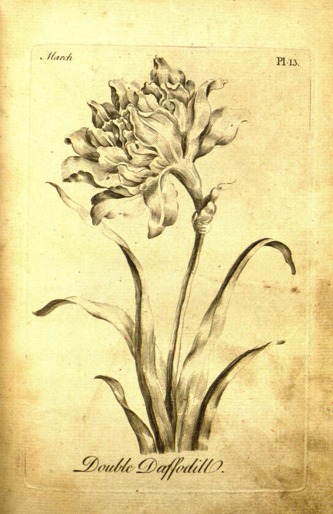 Le premier livre de coloriages date de 1760 et il est pour les adultes !