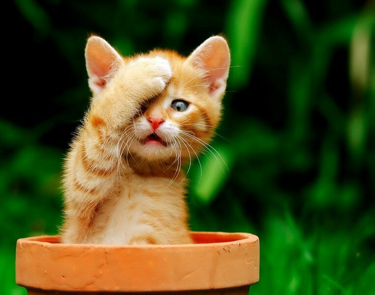 GUND Pusheen Stuffed Animal Mini Tablet Case Cat Plush 10