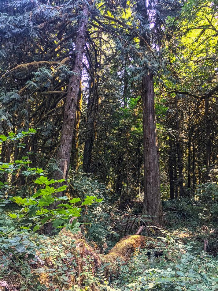 Орегон. Дороги, Природа, Кемпинг