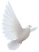 White_Dove_Transparent_PNG_Clipart.png