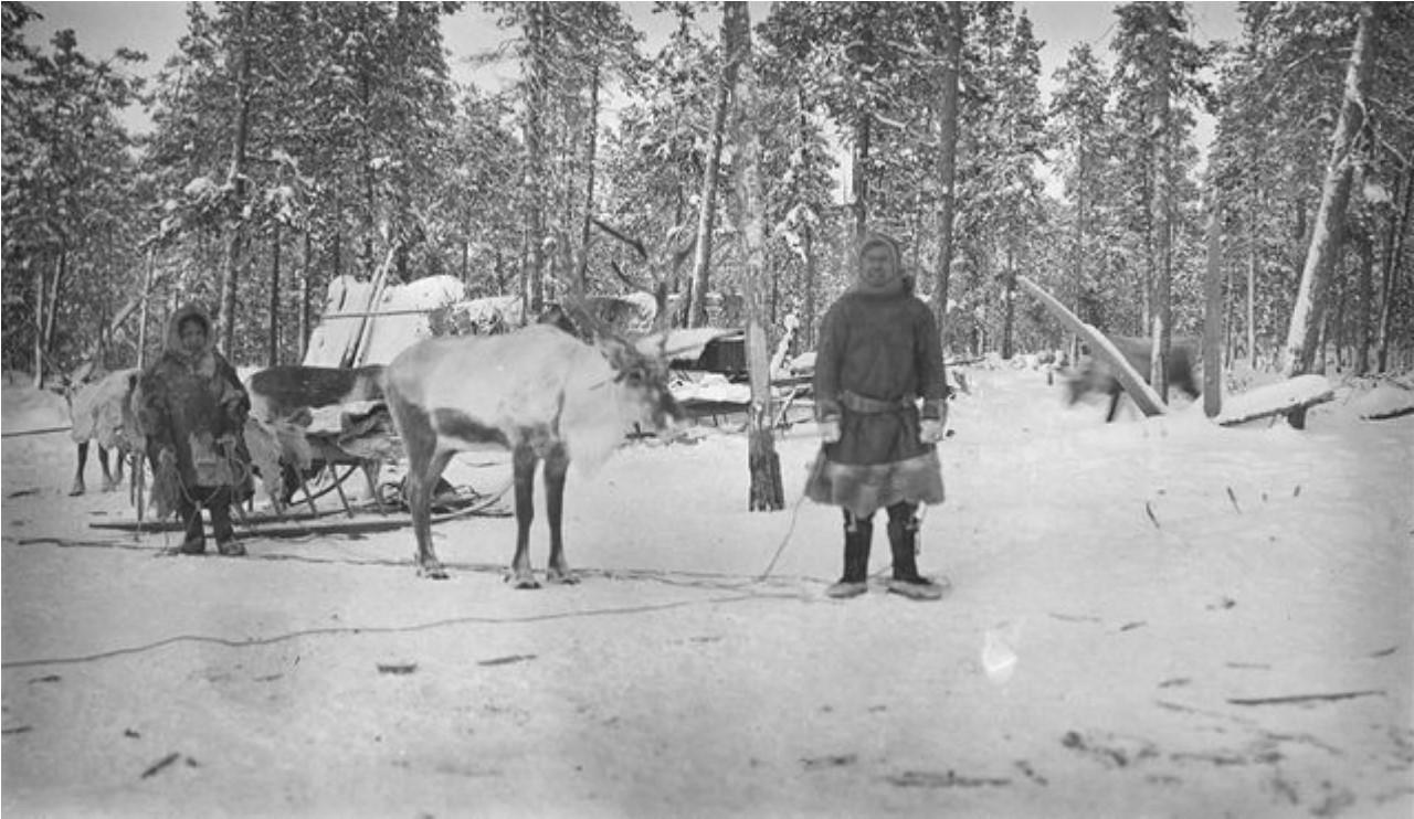 Андреев и другой самоед с оленями