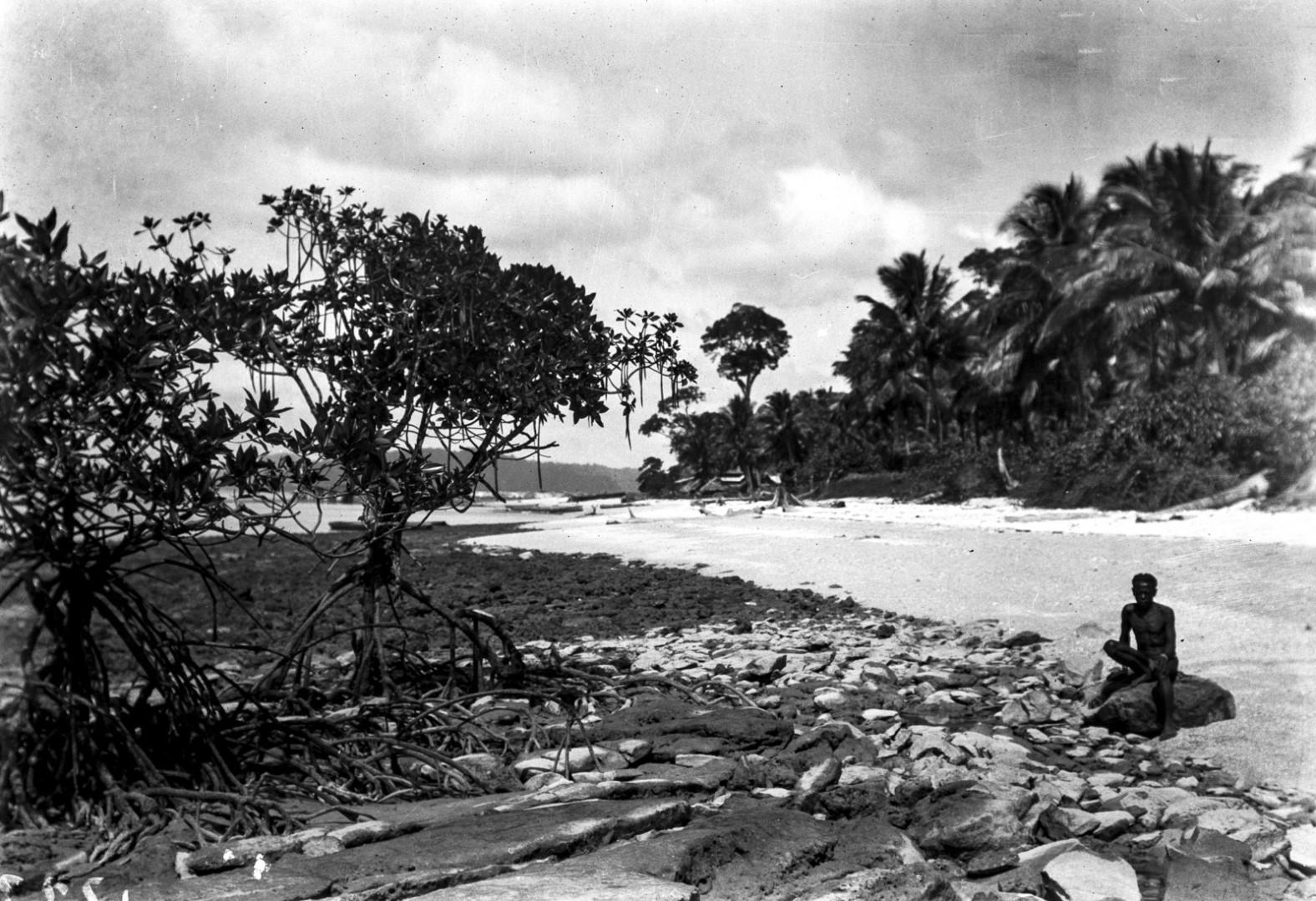 1254. Мангровые заросли на берегу острова Лонг