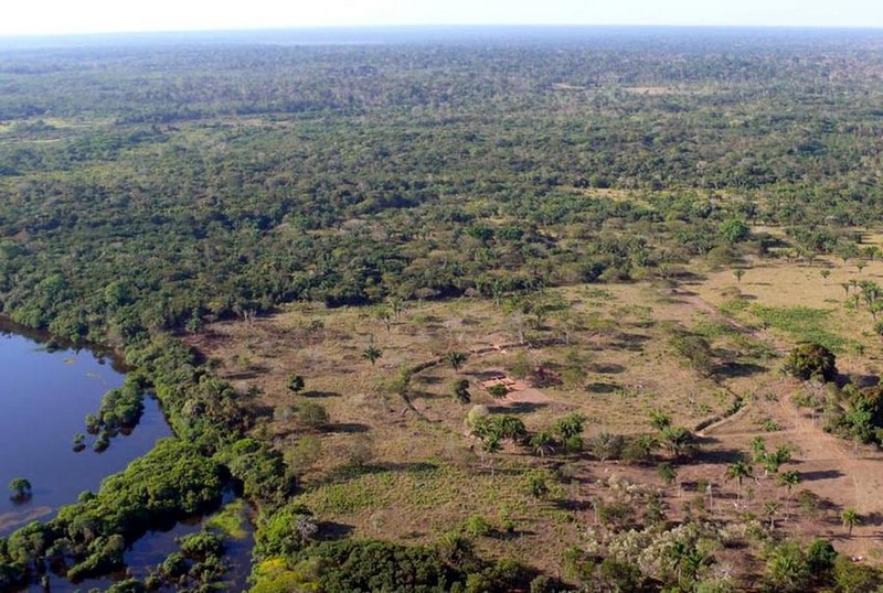 Неожиданные тайны джунглей