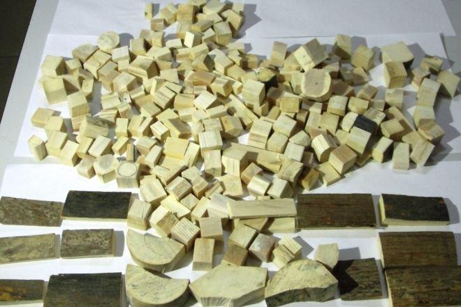Гражданин КНР пытался вывезти из России 240 фрагментов бивней мамонта