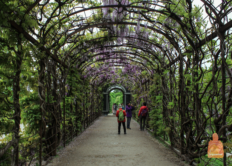 Оранжереи в Шенбрунне