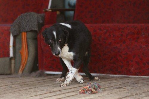 Бакс собака из приюта догпорт
