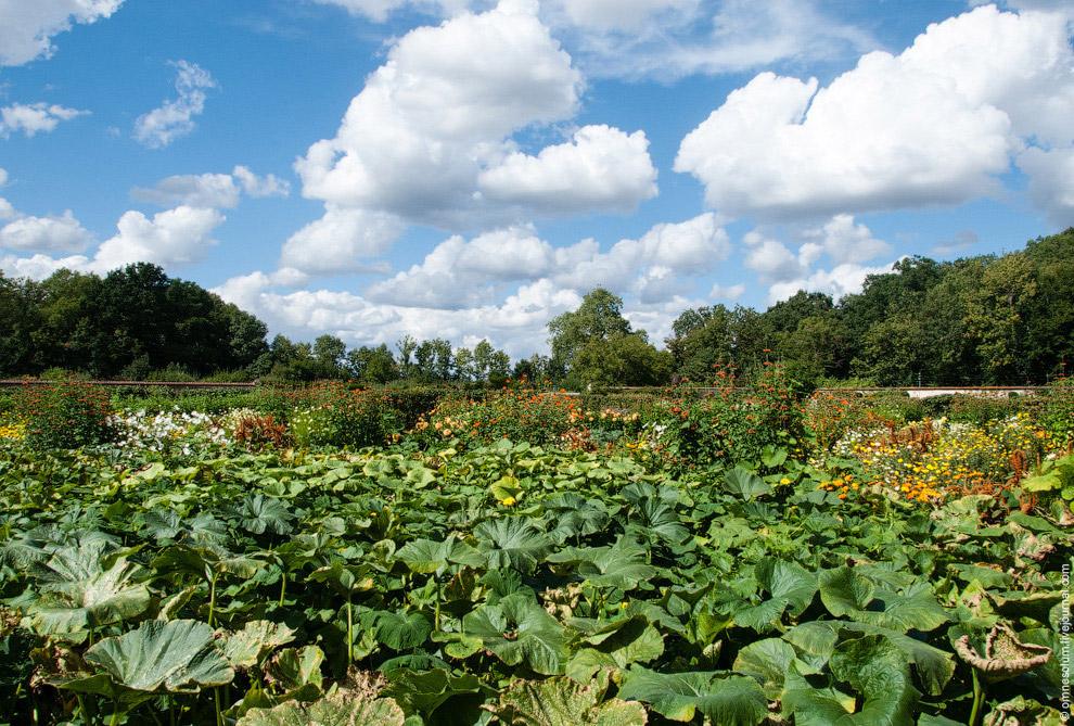 Сад поделён на квадраты с помощью широких аллей из мягкого газона, по которому так приятно ступ