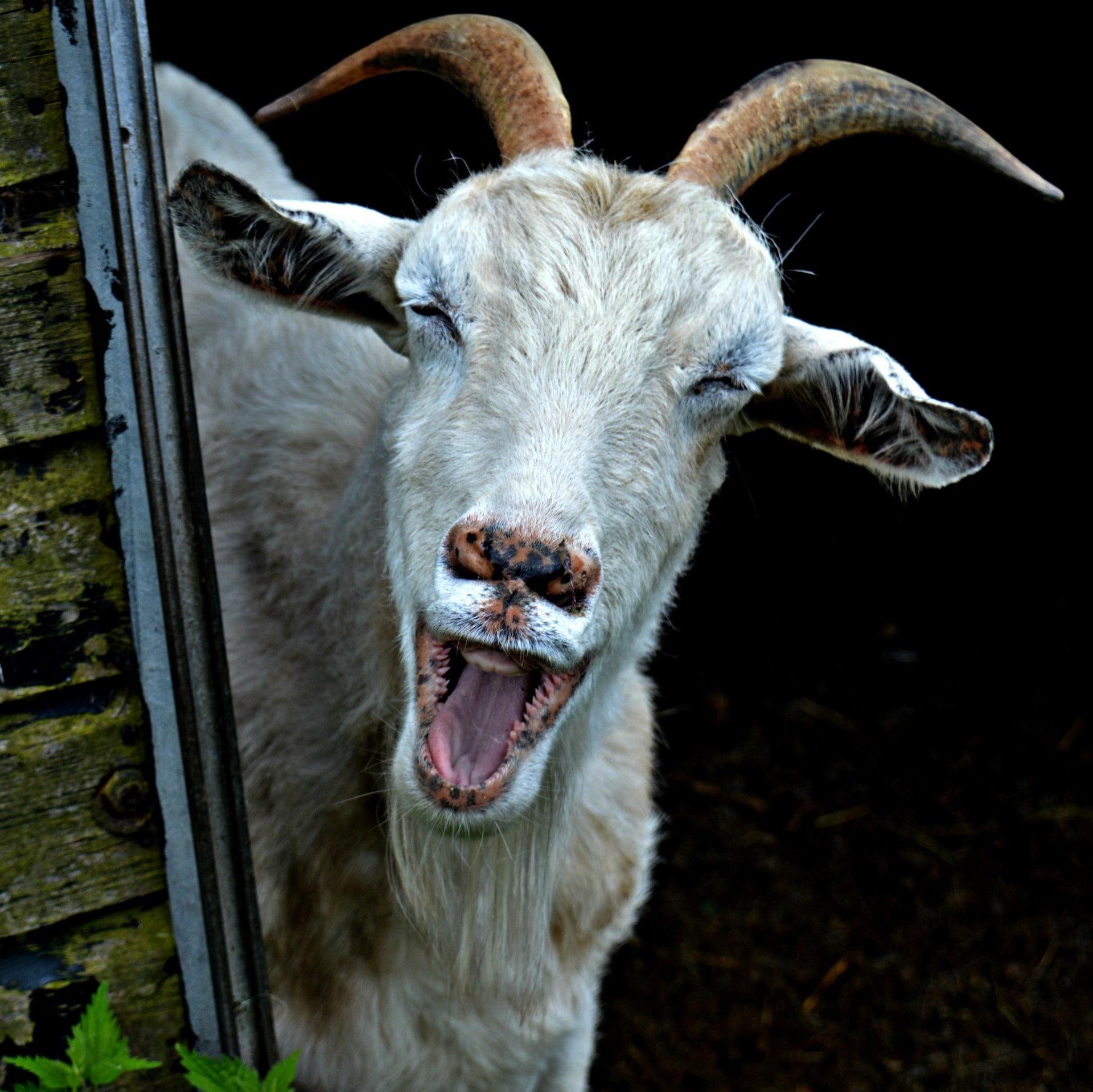 Осел пересказал анекдот козлу. Лиз Хаммонд, Великобритания.