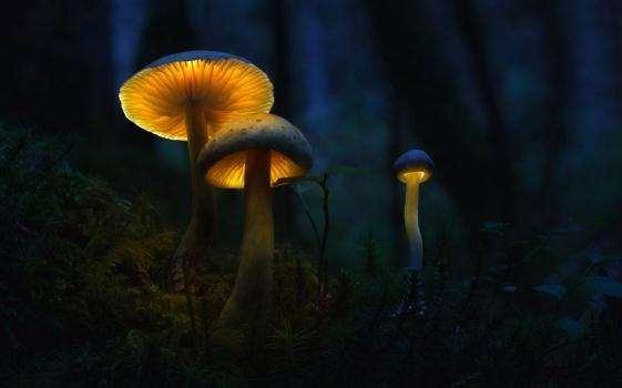 Русские ученые обучили нетолько лишь грибы светиться всеми цветами радуги