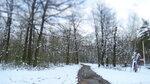 123.JPG Весенний лес.