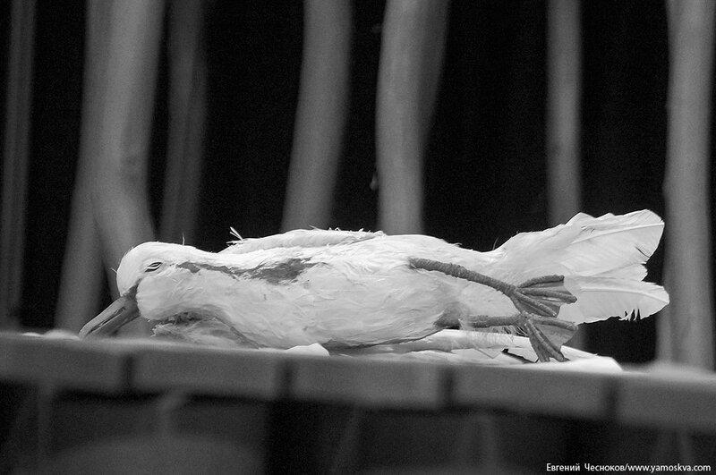 Театр на Таганке. Чайка 73458. 20.04.17.23..jpg