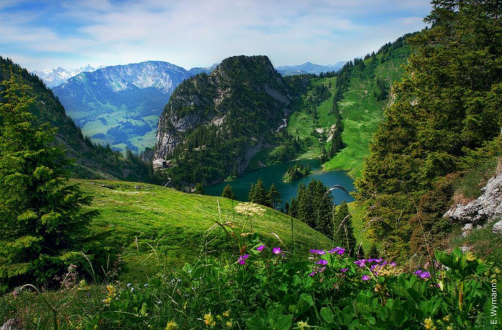 горное разноцветье и разнотравье