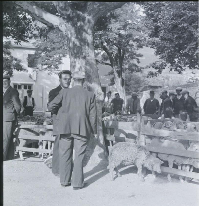 Торговец овцами, Хуст