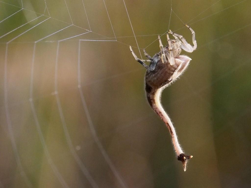 Форма паука 56