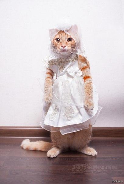 кошки-кошк-14.jpg