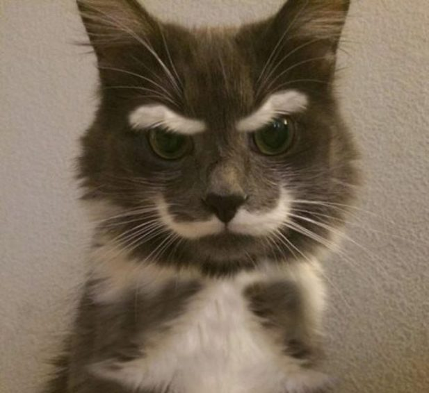 кошки-кошки-2.jpg