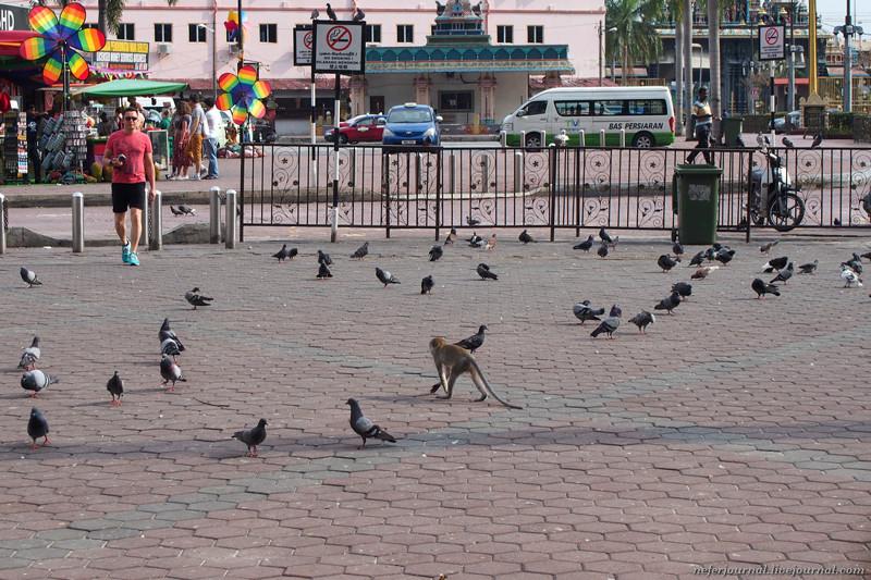 По площади ходят наглые обезьяны. Они совсем не боятся людей, наоборот, людям надо опасаться их, осо