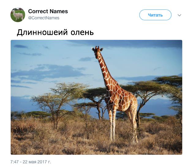 В твиттер-аккаунте дали «правильные» названия привычным вещам