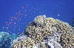 Здравствуй, Красное море!...DSCF7485ОВ.JPG
