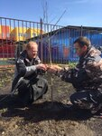 29 апреля во всех поселениях Щелковского муниципального района прошла акция Лес Победы, в ходе которой были высажены тысячи деревьев
