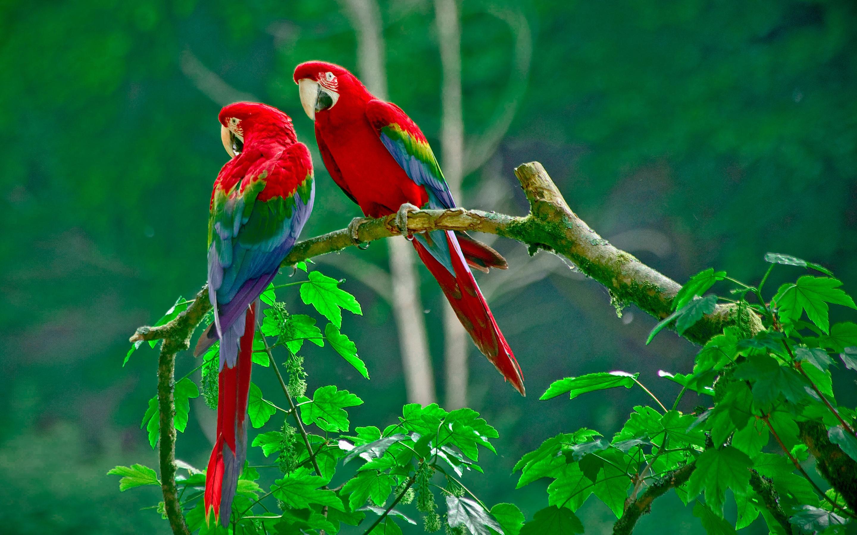 природа животные птицы попугаи  № 103538  скачать