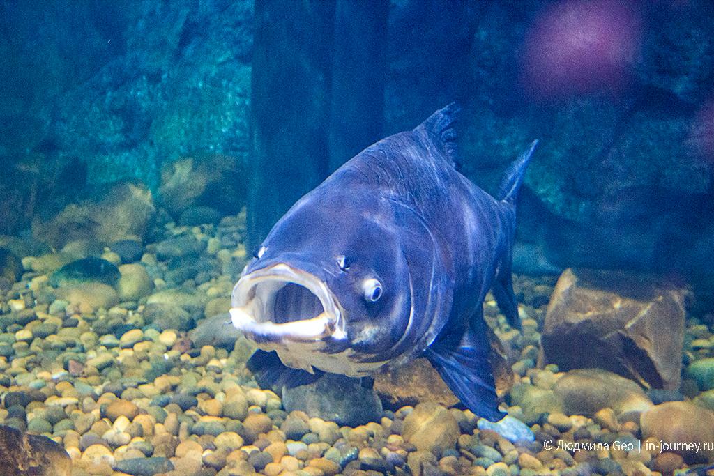 рыбы в океанариуме бангкока