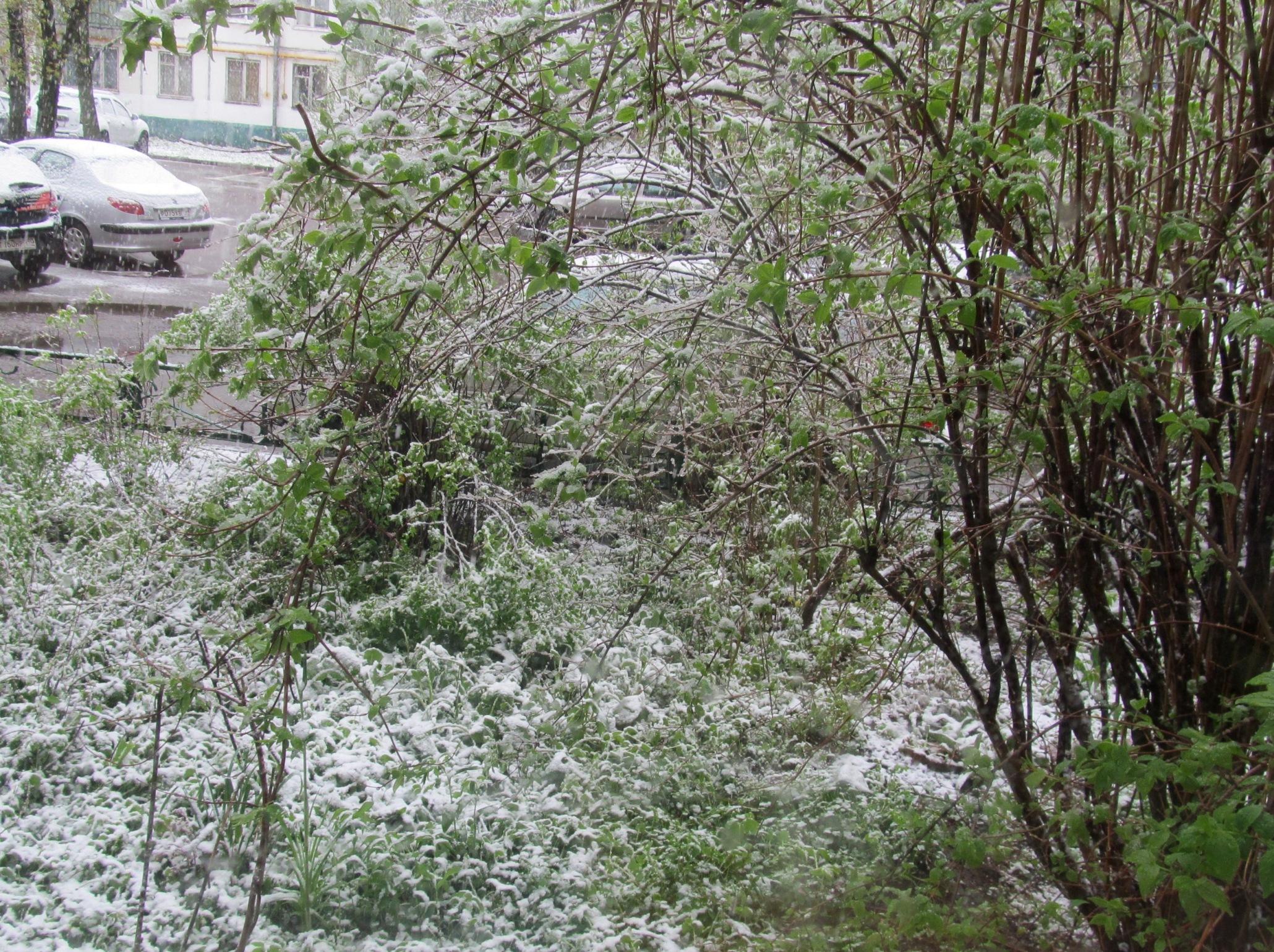 снег 8 мая (1).JPG