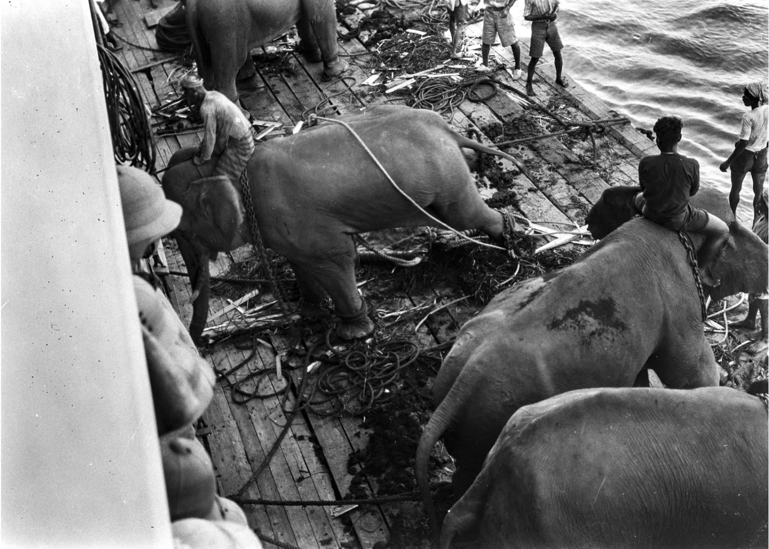 1120. Погрузка слонов