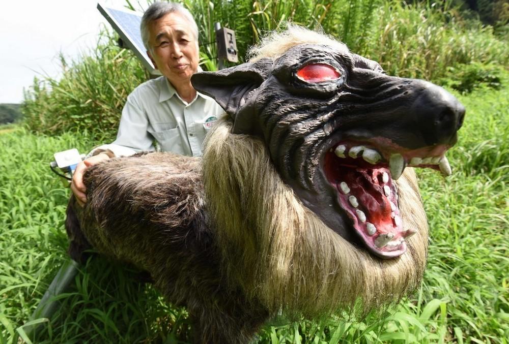 Волк-робот охраняет сельскохозяйственные культуры