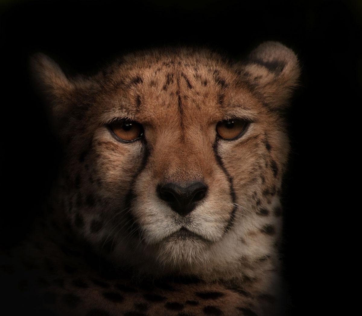 Портреты животных / фото Paul Sawford