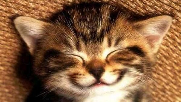 С Днем улыбки! Котенок улыбается