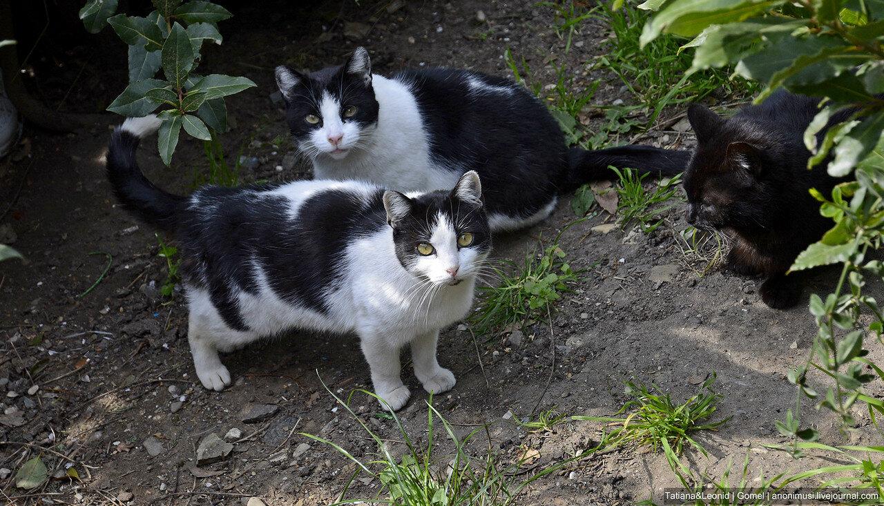 Котики из Сеттиньяно. Италия