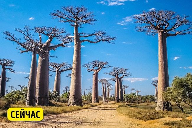 © depositphotos  Предполагается, что к2025 году все леса будут вырублены , если ихнеспасти.