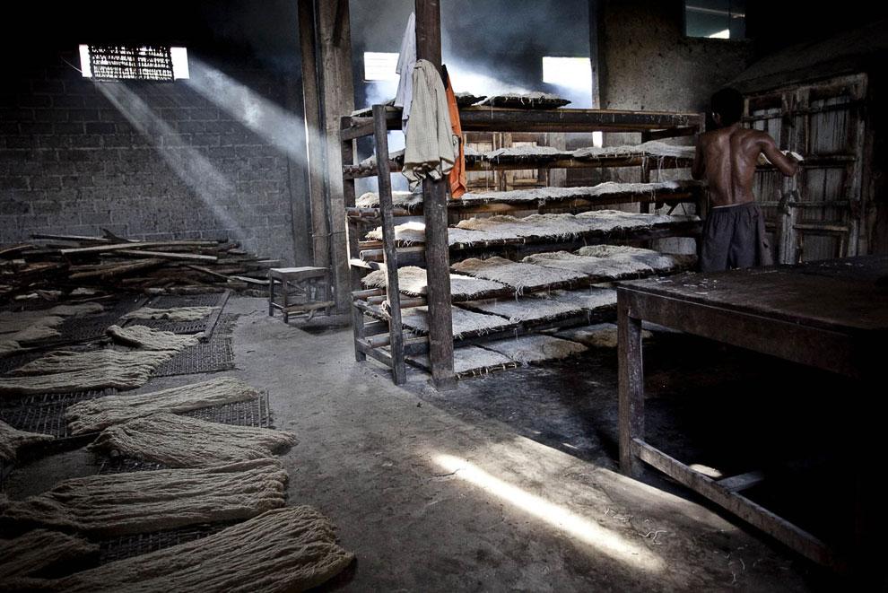 Настоящее экологичное производство: коровы — мукомолы, печь на дровах. (Фото Ulet Ifansasti   G