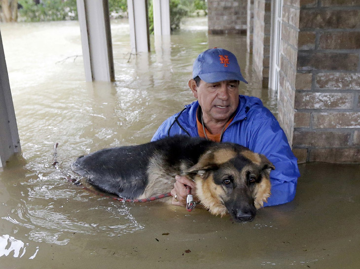1. Хозяин тащит свою собаку, Хьюстон, 28 августа 2017. (Фото Jonathan Bachman | Reuters):