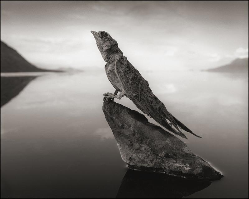 Calcified Swallow, Lake Natron, 2012