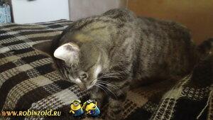 у кошки повышенное давление