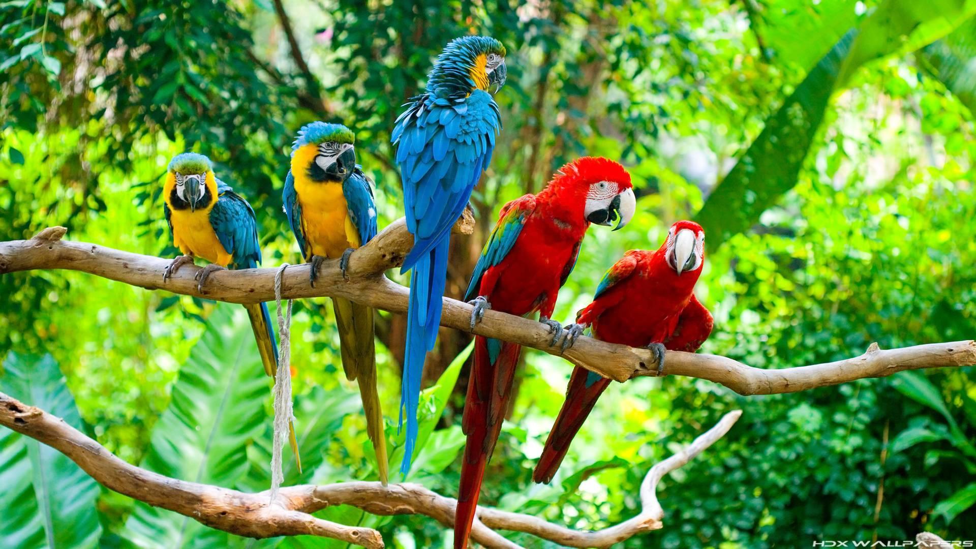 природа животные попугаи ара nature animals parrots Ara онлайн