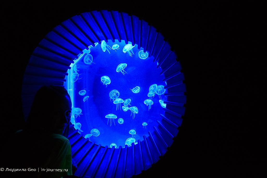 медузы в океанариуме siam ocean world