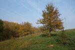 груша на склоне поля
