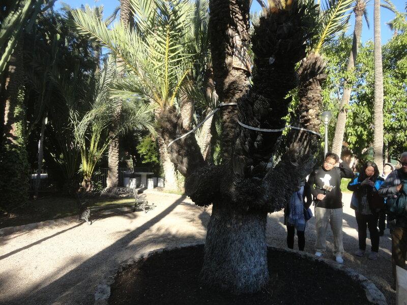 Самый большой пальмовый лес Европы