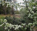 Весенний взгляд  на мир