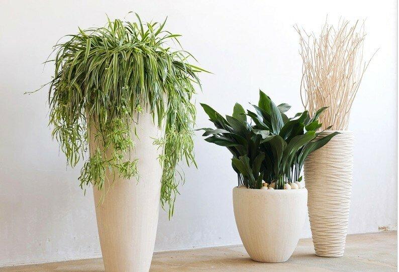 Эротические рассказы про растений фото 229-920