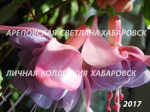 НОВИНКИ ФУКСИЙ. - Страница 5 0_19a021_21d5c14e_L